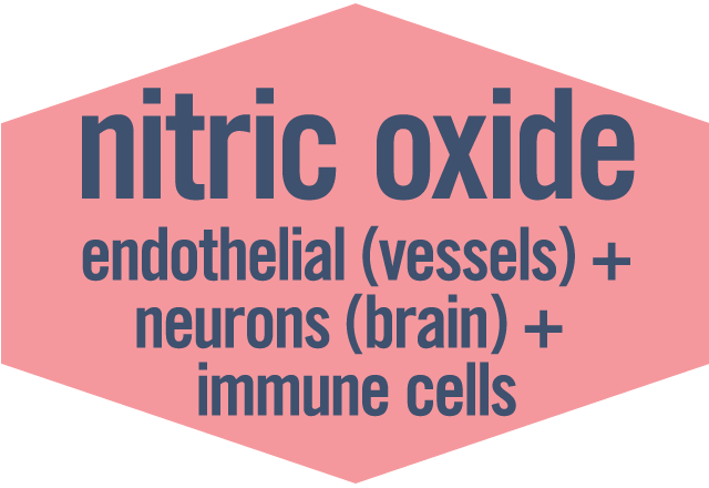 #3 Nitric Oxide: endothelial in vessels + neurons in brain + immune cells